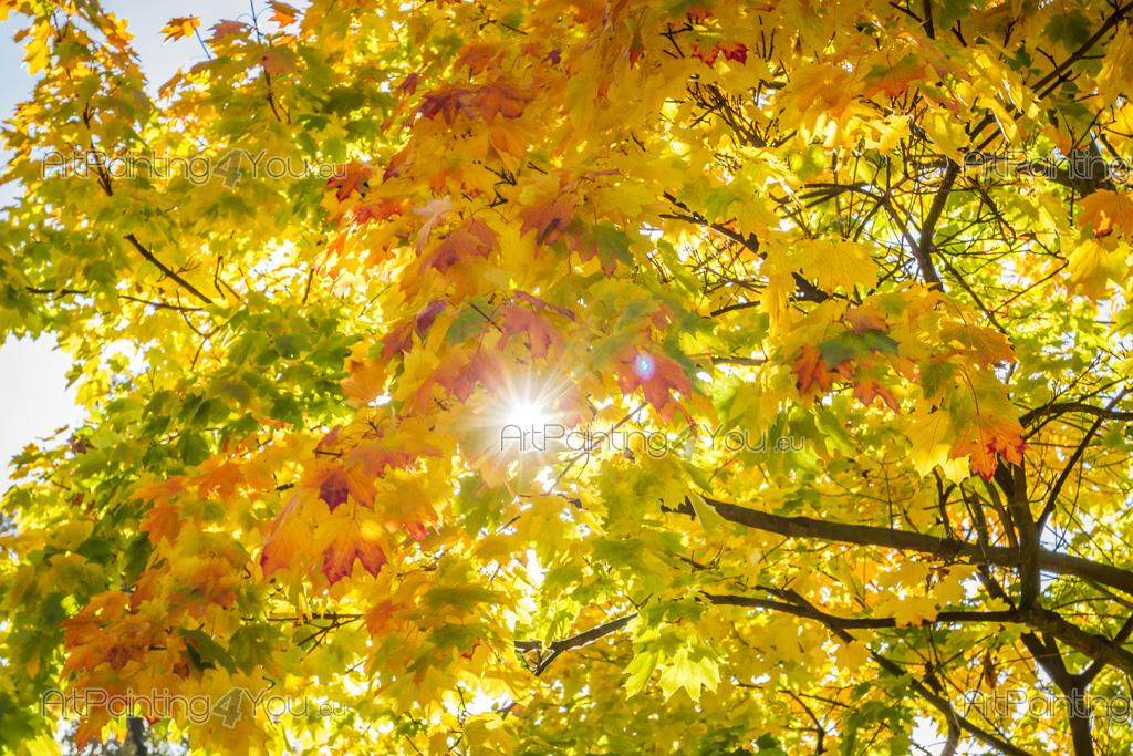 Autumn Leaves - Nature wall murals with a spectacular autumn tree with yellow leaves