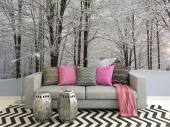 Snow Trees - Black and White Wall Murals & Posters