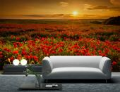 Poppies - Sunset Wall Murals & Posters