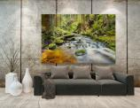 Forest and River - Wall Murals Nature Landscape & Posters