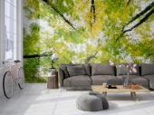 Wall Murals & Posters - Decorate a wall with a photographic mural or a decorative canvas. Feel the warmth of Spring in your room and look through tree branches full of green ...