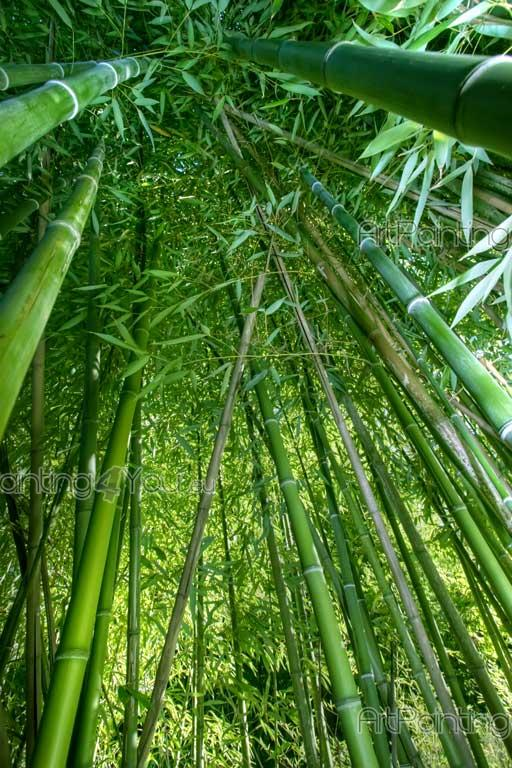 Bamboo Forest   Tropical Beach Wall Murals U0026 Posters Part 53