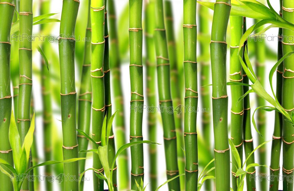 Fotomurales p sters bamb for Pergolato con canne di bambu