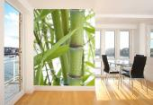Fresh Bamboo - Tropical Beach Wall Murals & Posters