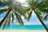 Palm Trees - Tropical Beach Wall Murals & Posters