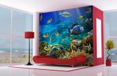 Sealife - Underwater Wall Murals & Posters