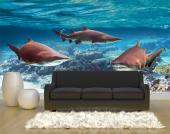 Sea Life - Underwater Wall Murals & Posters