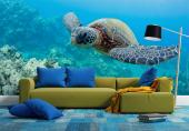 Sea Turtle - Underwater Wall Murals & Posters
