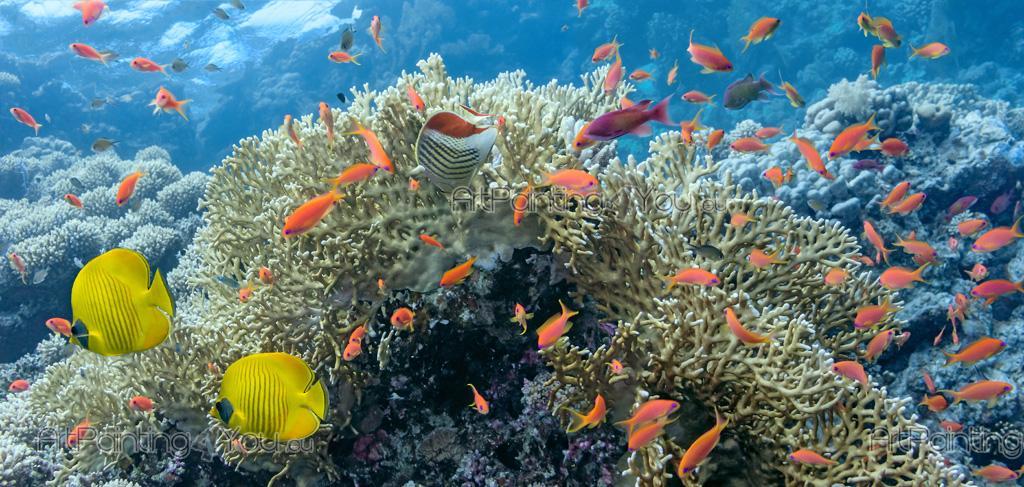 ... Underwater Life   Underwater Wall Murals U0026 Posters