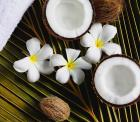 Plumeria Flower - Zen and Spa Wall Murals & Posters