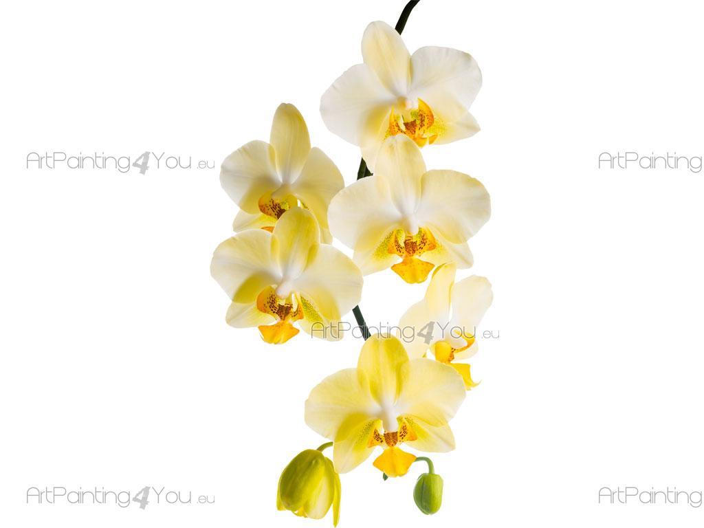Orchideen Schlafzimmer